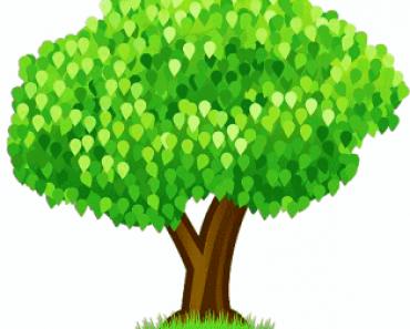 family tree facebook